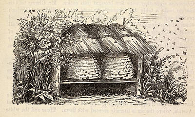 Bee Hive Photograph - Beeton's Gardening Book by British Library