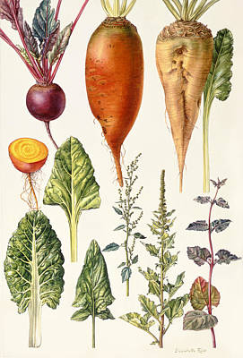 Spinach Photograph - Beetroot And Other Vegetables Wc by Elizabeth Rice