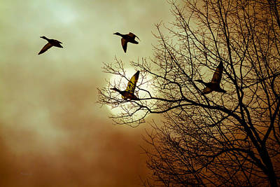 Birds Rights Managed Images - Before a Winter Sky Royalty-Free Image by Bob Orsillo