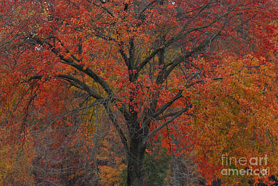 Photograph - Before Autumn Leaves by Geri Glavis