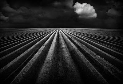 Sow Photograph - Before The Rain by Marc Apers