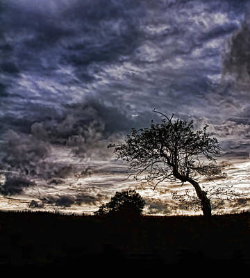 Photograph - Nova Scotia's Lonely Tree Before The Storm  by Ginger Wakem