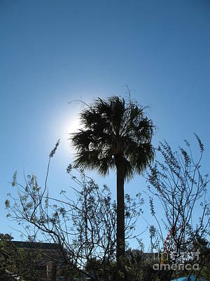 Photograph - Before Version. Backlit Palm by Connie Fox