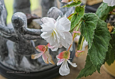 Photograph - Begonia by Denise Romano