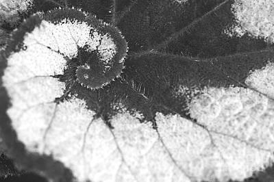 Gentle Photograph - Begonia Escargot Leaf Venation by Floyd Menezes