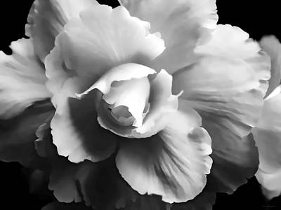 Begonia Flower Monochrome Art Print