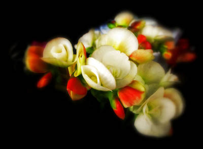 Begonia Photograph - Begonia by Jessica Jenney