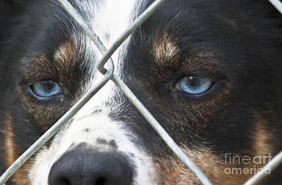 Behind Fences Art Print