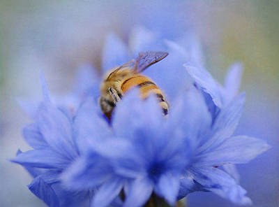 Bee On Flower Photograph - Behind The Bee by Fraida Gutovich