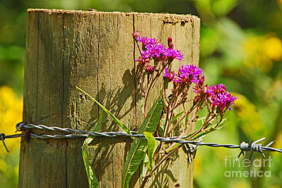 Photograph - Behind The Fence by Mary Carol Story