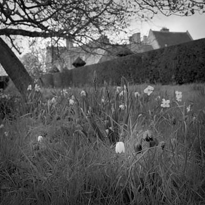 Photograph - Behind The Hedge Under The Tree by Christopher Rees