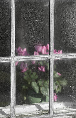 Behind Window Print by Svetlana Sewell