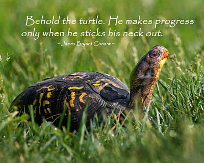 Box Turtle Photograph - Behold The Turtle by Bill Wakeley