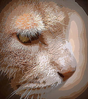 Photograph - Beige Cat Close Up by Sheri McLeroy