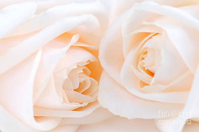 Roses Royalty-Free and Rights-Managed Images - Beige roses by Elena Elisseeva