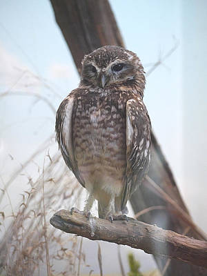Photograph - Being A Burrowing Owl Is A Hoot by Richard Reeve