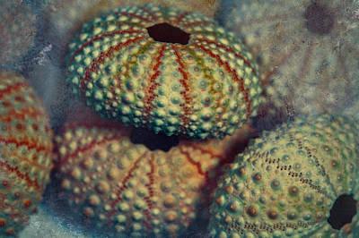 Bejeweled Art Print by Bonnie Bruno