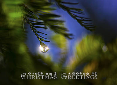 Photograph - Bejeweled Christmas Greeting by Mark Andrew Thomas