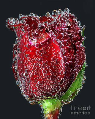 Art Print featuring the photograph Bejeweled Rose by ELDavis Photography