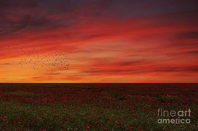 Photograph - Bel Tramonto by Lee-Anne Rafferty-Evans