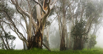 Gumtree Photograph - Feeling Misty by Andrew Dickman
