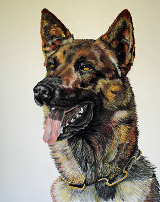 Dog Portrait Pastel - Belgian Malinois by Ann Marie Chaffin