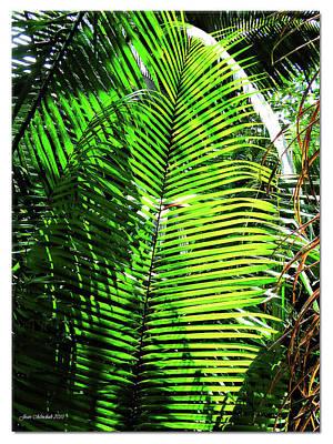 Digital Art - Belize Caracol Jungle by Joan  Minchak
