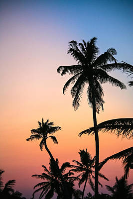 Photograph - Belize Palms by Randy Green