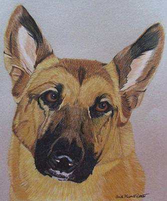 Drawing - Bella - German Shepherd Dog Commission by Anita Putman