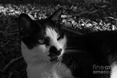 Photograph - Bella On Rocky Terrain by Jennifer E Doll