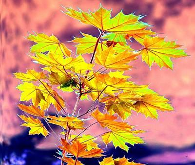 Maple Leaf Art Digital Art - Belles Feuilles D'erable by Will Borden