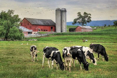Rural Scenes Digital Art - Belleville Cows by Lori Deiter