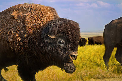 Belligerent Bison Art Print by Tracy Munson