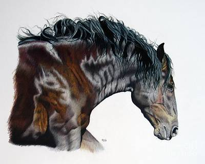 Drawing - Bellus Equus by Rosellen Westerhoff