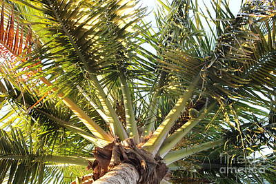 Below A Palm Tree Art Print