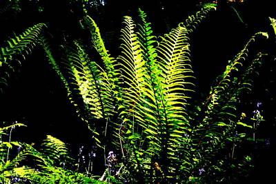 Fiddleheads Photograph - Below The Canopy by Aidan Moran