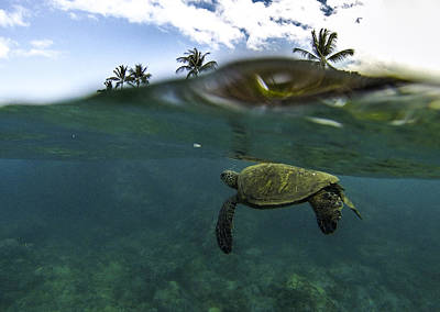 Hawaiian Green Sea Turtle Photograph - Below The Surface by Brad Scott
