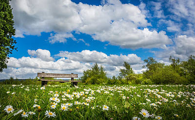 Photograph - Bench And Daisies by Gary Gillette