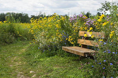Bench And Meadow Print by Ann Bridges