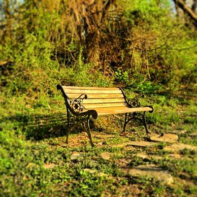 Bench At The Pond  Art Print