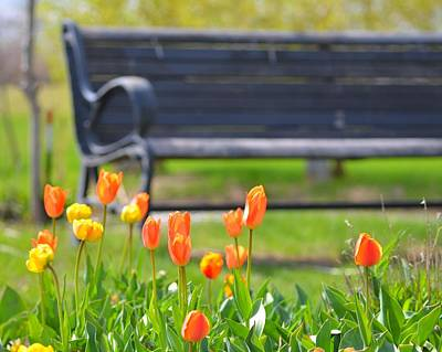 Photograph - Bench Behind The Tulips by Toby McGuire