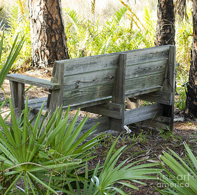 Bench In Nature Art Print