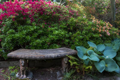 Flower Blooms Photograph - Bench In The Garden by Garry Gay