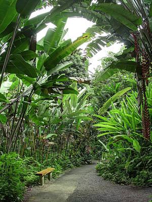 Bench In The Jungle - Hawaii Art Print by Daniel Hagerman