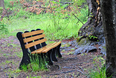 Photograph - Bench In The Rain by Judy Salcedo