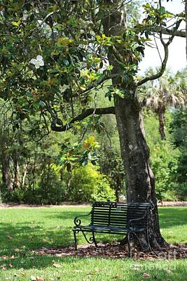 Park Benches Photograph - Bench Under The Magnolia Tree by Carol Groenen
