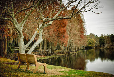 Cypress Knees Photograph - Bench With A View by Carolyn Marshall