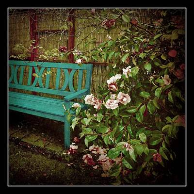 Pink Rose Bushes Digital Art - Bench With Pink Roses by Patricia Strand