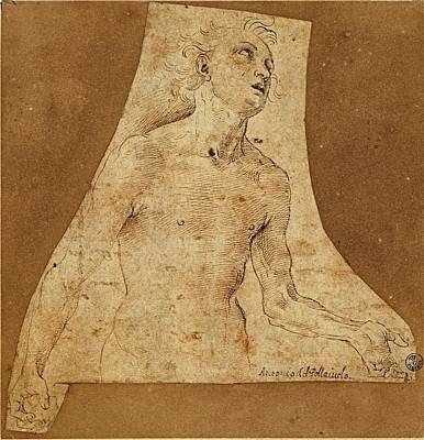 Nude Young Man Photograph - Benci Antonio Known As Il Pollaiolo by Everett