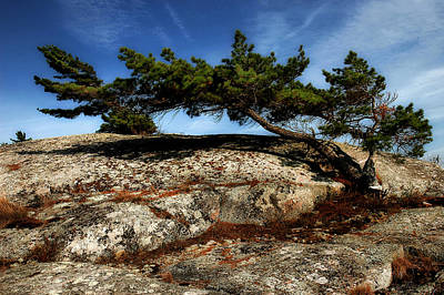 Photograph - Bend By The Wind by Patrick Boening